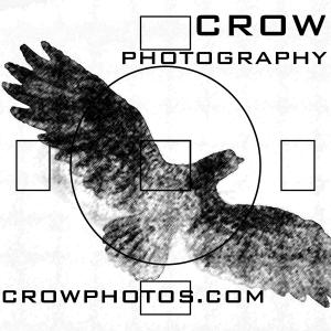 crowphotos